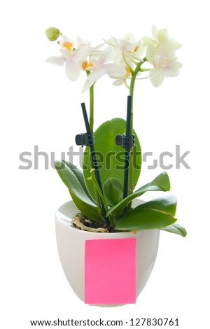 Orchid in pot with a blank paper isolated on white - stock photo