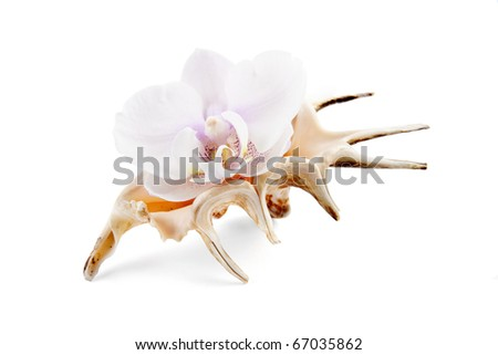 orchid in shell on white - stock photo