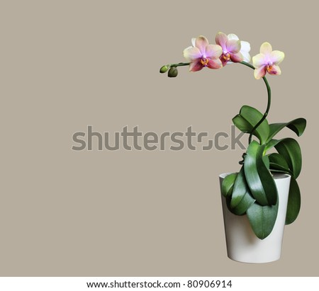 orchid isolated - stock photo