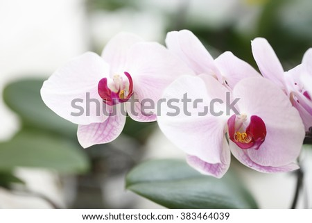 orchid isolated, close up - stock photo