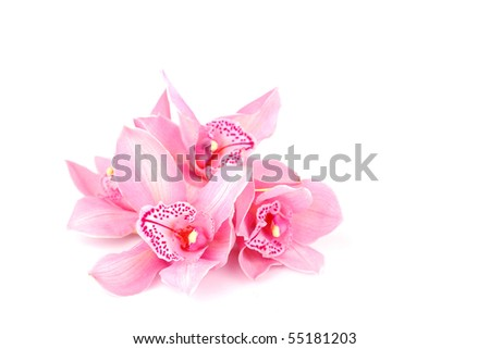 orchid isolated on white - stock photo
