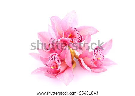 orchid isolated on white background - stock photo
