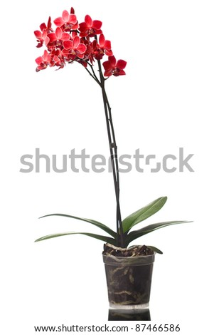 orchid isolated on white background (shallow dof) - stock photo