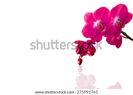 Orchid isolated on white background.Spa background. - stock photo