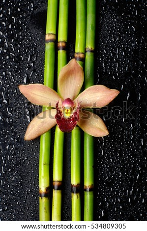 orchid on bamboo grove-wet background