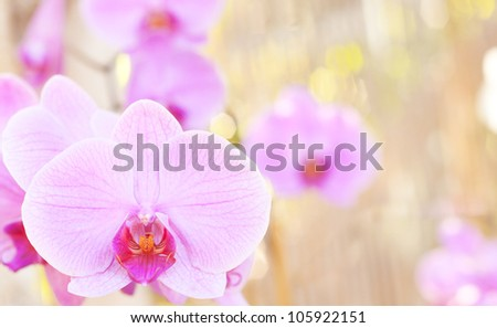 Orchid on the abstract blurred background
