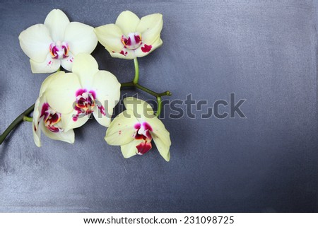 Orchid on the chalkboard - stock photo