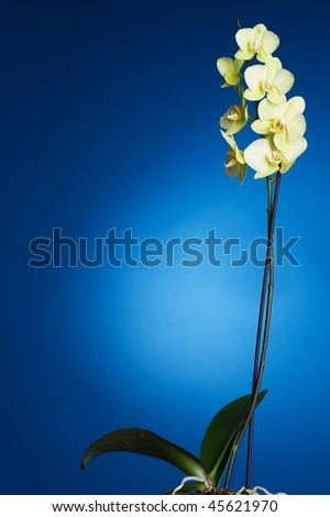 Orchid over blue