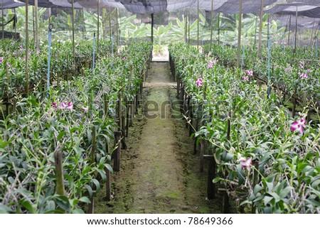 Orchid Plant Nursery - stock photo