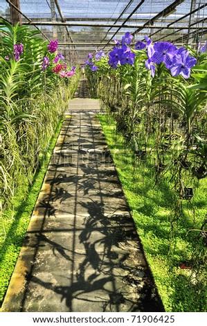 Orchid plant nursery asia Thailand - stock photo