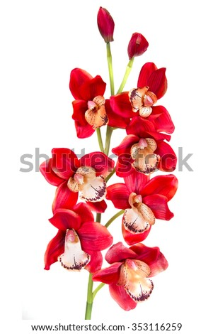 orchid red artificial flower isolated on white background - stock photo