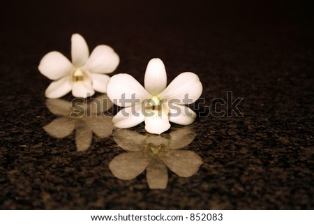 Orchid reflection on a marble surface - stock photo