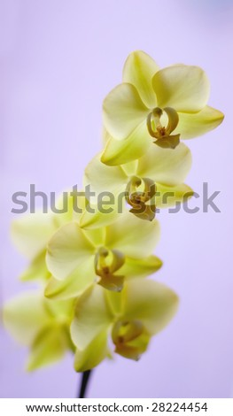orchid , shallow dof - stock photo