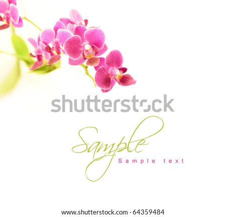 Orchid with copy space - stock photo