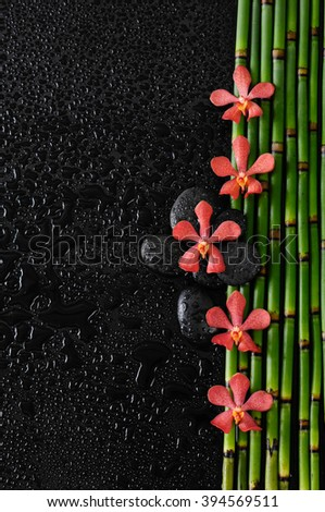 orchid with stones on bamboo grove-wet background  - stock photo