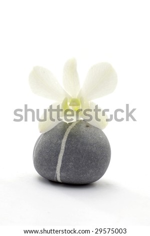 Orchid with stones on white
