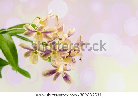 Orchid yellow backdrop beautiful bright pink color