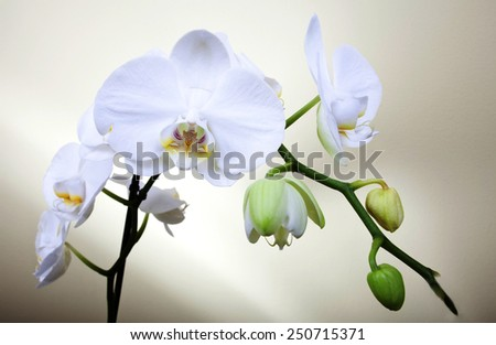 Orchids. - stock photo