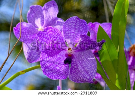Orchids 2 - stock photo