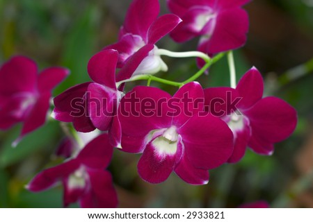 Orchids 3 - stock photo