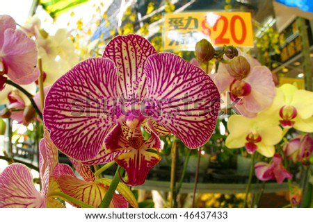 Orchids at the Flower Market in Hong Kong. - stock photo
