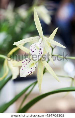 Orchids blooming in garden,close up - stock photo