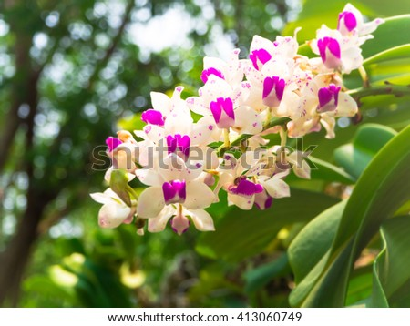 Orchids blooming in the garden - stock photo