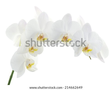 orchids flower