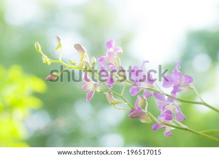 Orchids flower in garden