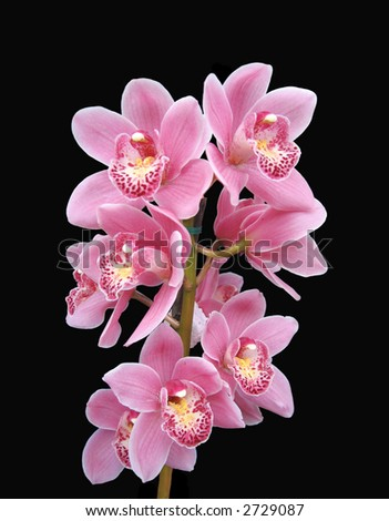 Orchids flower on black - stock photo