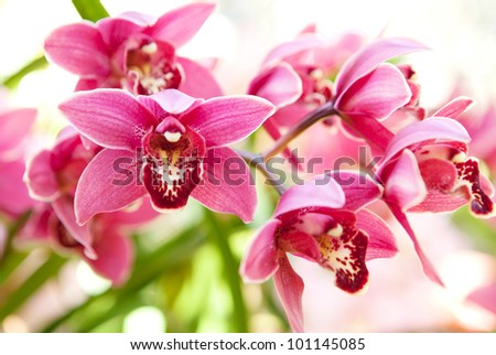Orchids flowers macro in pink and soft in San Diego botanical garden. - stock photo
