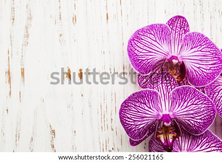 Orchids flowers on a old white wooden background - stock photo