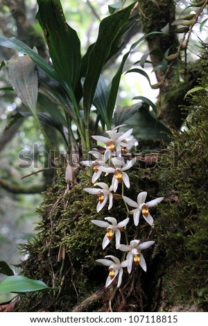 Orchids hanging from a tree trunk in Thailand rain forest - stock photo