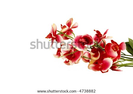 Orchids isolated on white background - stock photo