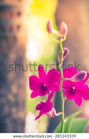 Orchids pink color