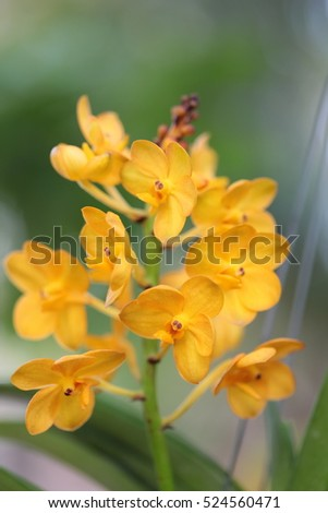Orchids Thailand