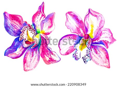 orchids watercolor illustration. isolated on white. tropical flowers. - stock photo