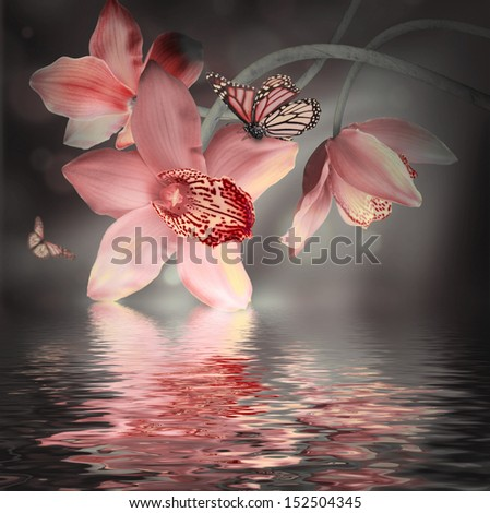 Orchids with a butterfly on the coloured background - stock photo