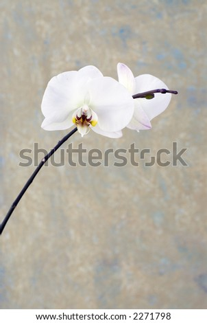 Orcid blossom and background. - stock photo