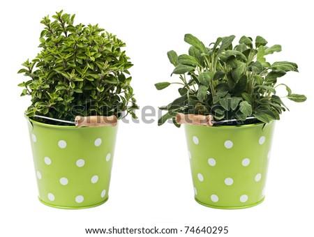 Oregano and sage herbs isolated on white - stock photo
