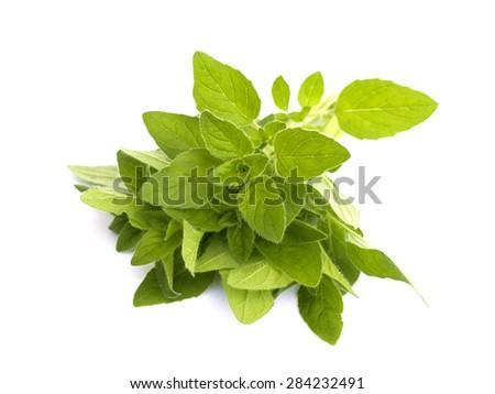 oregano on a white background - stock photo