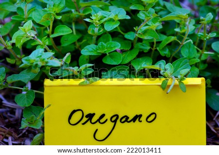 Oregano plant with name tag, grow in home garden. - stock photo
