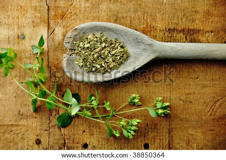 Oregano sprig with dried in a wooden spoon on a rustic wood table. - stock photo