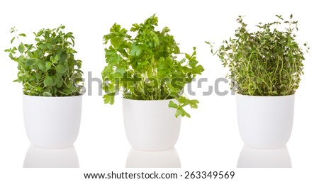 Oregano, thyme and coriander in ceramic pots, isolated on white background