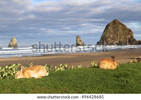 Oregon bunnies