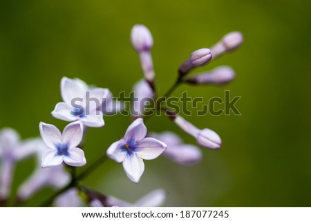 organ buds and flowers on green background - stock photo