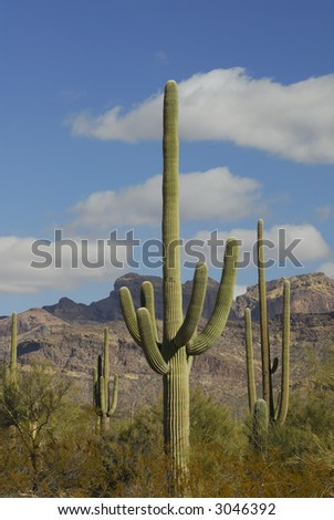 Organ Pipe National Monument - stock photo