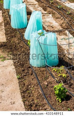 Organi vegetable community garden in early Summer. - stock photo