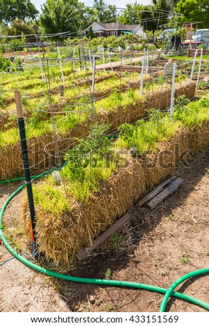 Organi vegetable community garden in early Summer.