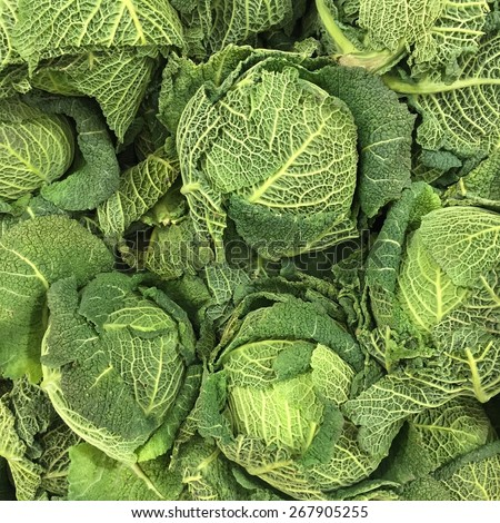 Organic and fresh Savoy Cabbages or Brassica Oleracea as background - stock photo